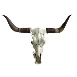Long-Horn Schädel, GFK, hängend 80  x 50cm Wild- West Deko