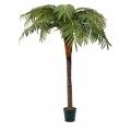Kokos-Palme, 2m Stamm,  steckbar